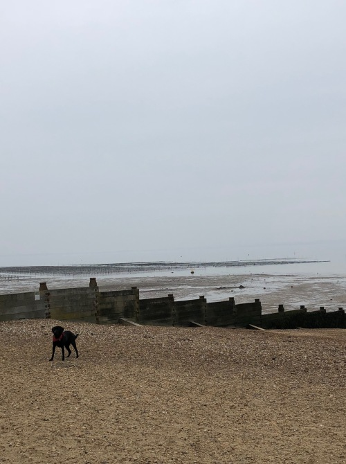 Seaside in whitstable yale wanders after getting off the train we walked the direction of whitstables high street to grab coffee at blueprint coffee definitely recommend great espresso malvernweather Choice Image